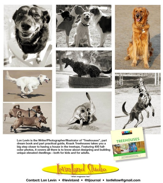 Lon Levin dog action photography