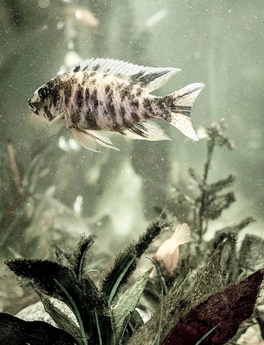 FISH IN AQUARIUM_9992.LR