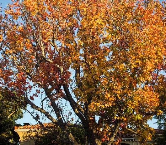 TREES_9872.lr