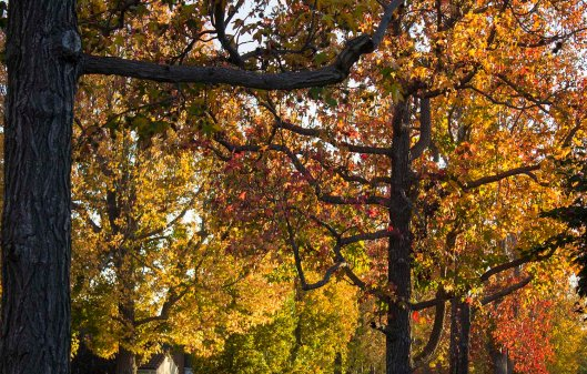 TREES_9873.lr