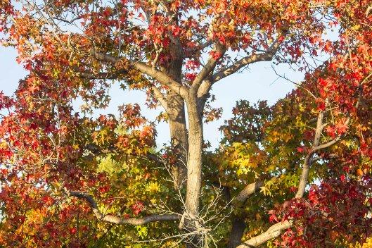 TREES_9874.lr