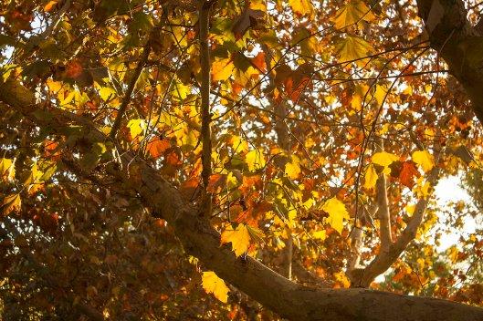 trees_9875.lr