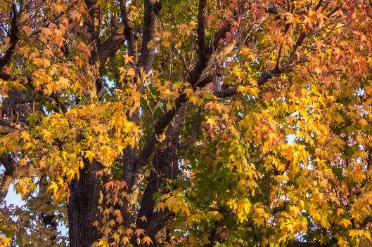 trees_9878.lr