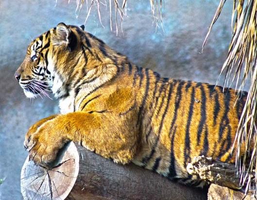 tiger lounge.lr_0079