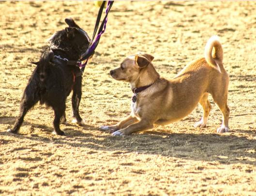 two doggies meet_0235